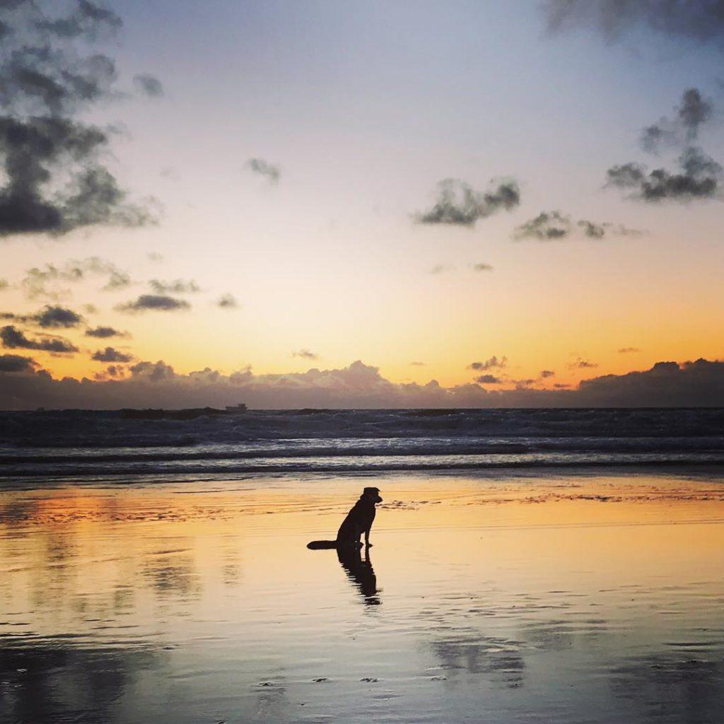 German Shepherd Husky Mix with Sunset