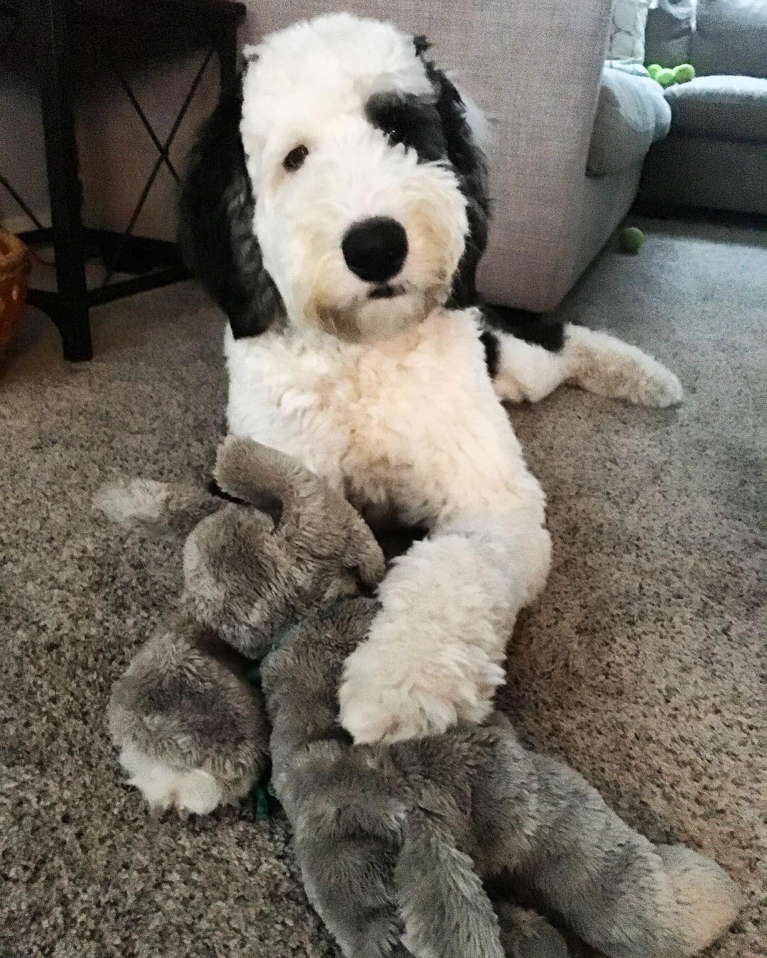 What Is The Best Sheep Dog